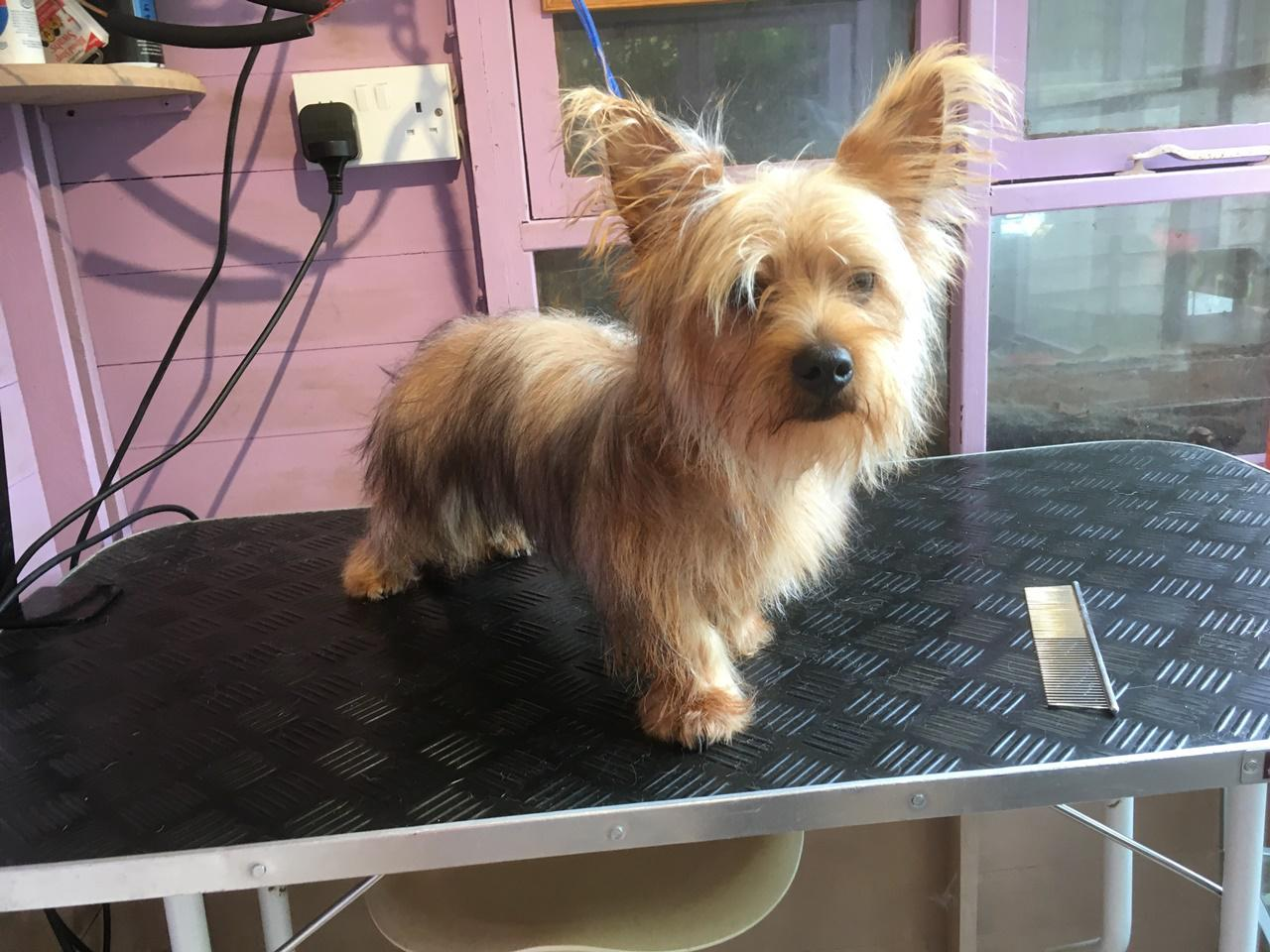 Dog grooming in Brighton and Hove Call 01273 708 488