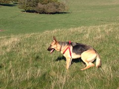 Dog walking service Brighton and Hove 0779 947 2631