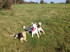 Dog Walking in Brighton and Hove Call 01273 708 488
